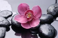 Macro d'orchidée rouge sur la pierre avec des gouttes d'eau
