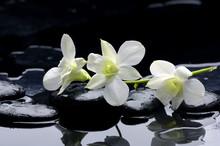 ligne de beauté de l'orchidée et de la pierre à la réflexion