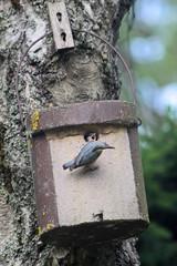 Vogelhaus mit Jungvogel