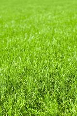 Parkrasen, Grünflächen, Rasenpflege, Gartenarbeit