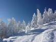 Winterwald zu Weihnachten