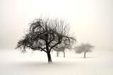 Fototapety Winterland