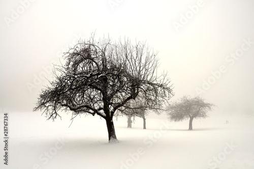 Winterland © Ulrich Müller