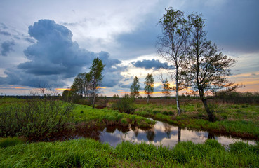 Summer field in sunset time. Russia
