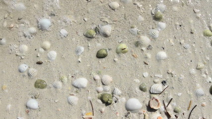 Seashells on Sand 2