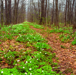 beautiful spring landscape in the forest with blooming flowers