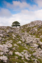 Tree standing alone in the rocks field