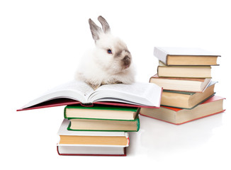 a rabbit is reading a book