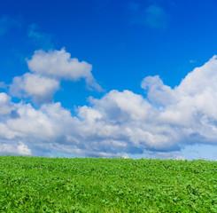 Field Scene Summer