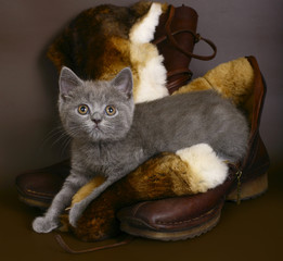 British kitten on boots.