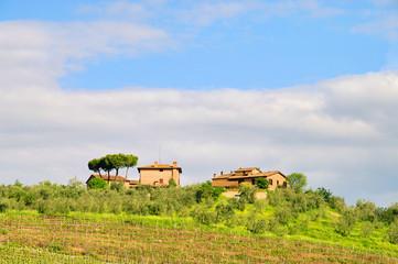 Toskana Weingut - Tuscany vineyard 01