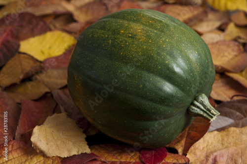 Acorn Squash on Leaves