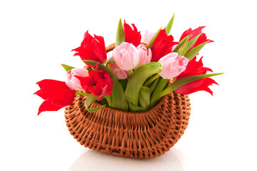 Wicked cane basket tulips