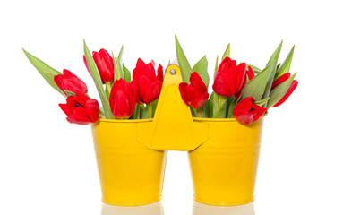 bouquet of red tulips in a yellow double bucket with handle isol