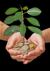Palms with a tree growng from pile of coins