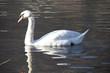 Fototapeten,swans,wasser,see,traum