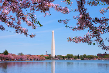 Cherry blossom and Washington monument over lake, Washington DC.