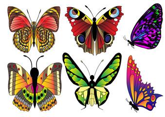 illustration set butterfly