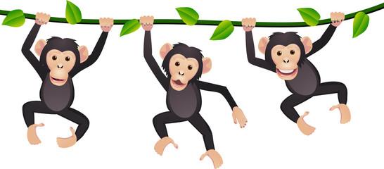 Three chimpanzee