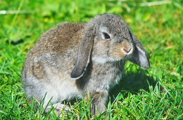 rabbit sitting on grass