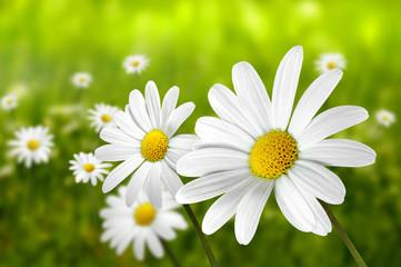 Blumen 192
