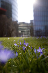 Spring meadow in front of office buildings