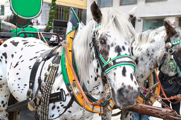 Horse-driven carriage at Hofburg palace, Vienna