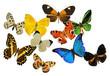 groupe de papillons