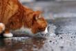 durstlöschender Regen
