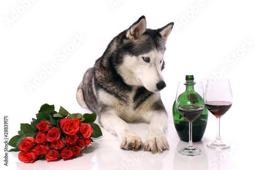 Fotobehang Struisvogel Hund Husky Rosen und Wein