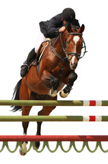 Horse show jump isolated on white