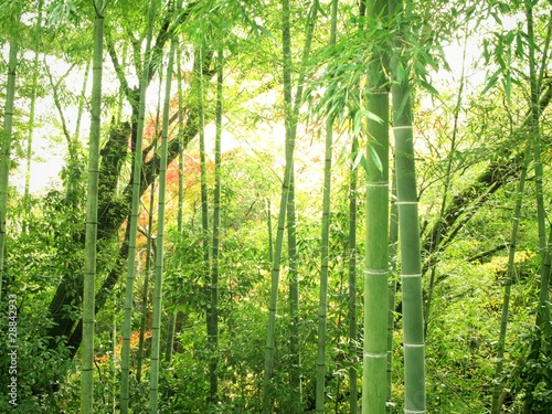 In de dag Bamboe 竹林