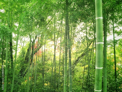 Canvas Bamboe 竹林