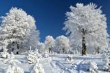 Fototapety Mountain trail between snowy trees