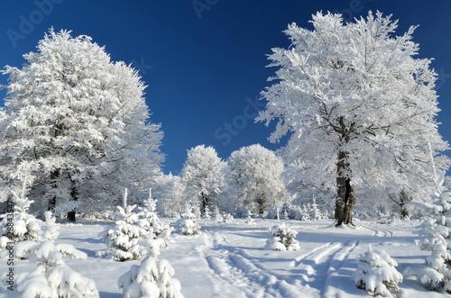 gorski-szlak-miedzy-osniezonymi-drzewami