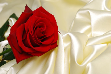 Red rose on gold satin
