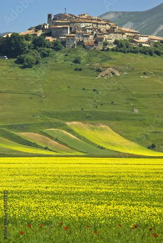 Leinwandbild Motiv Monti Sibillini: la Fioritura sul Pian Grande a Castelluccio 5