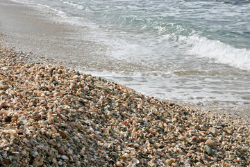 Shell on beach with waves.