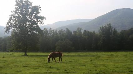 Horse Grazing in Valley