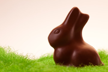 Chocolate rabbit on grass