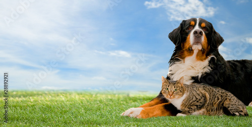 Dog and cat friends together on grass - 28892921