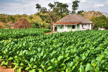 A small Tabacco Farm in Vinales