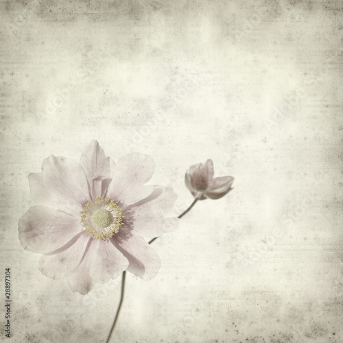 textured old paper background with pale pink japanese anemone br
