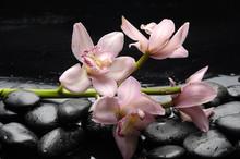 Nature morte avec orchidée rose