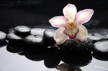 encore la vie avec macro de fleur d'orchidée