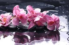 Pierre Zen et orchidée rose avec des gouttes d'eau