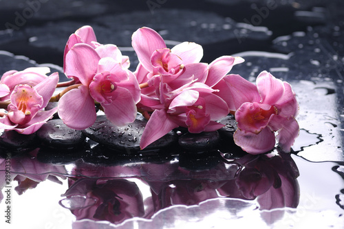 Zen stone and pink orchid with water drops