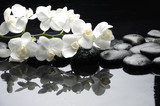 Fototapety Close up white orchid with stone water drops