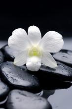 encore la vie avec macro d'orchidée