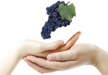 Grape and hands